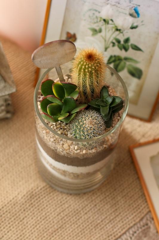 Мини сад с кактусами и суккулентами